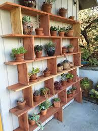 my husbands wonderful succulent shelf garden dreams pinterest