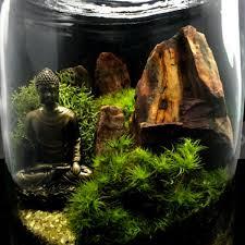 buddha moss terrarium apollobox