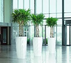 plants for office plants