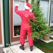 christmas tree delivery treesanta chicago christmas tree delivery 24 reviews christmas