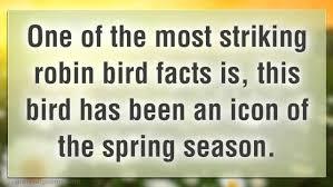 some amazing robin bird facts