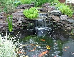 How To Make A Koi Pond In Your Backyard Winterizing Your Outdoor Fish Blog
