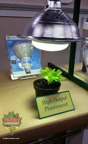 growing plants indoors with artificial light grow lights for beginners start plants indoors the foodie gardener