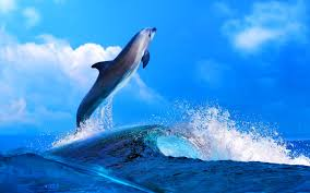 photo collection hd wallpapers dolphin