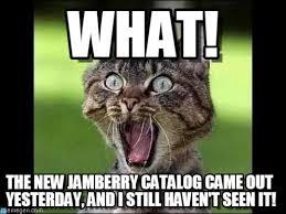 Meme Catalog - what cat meme on memegen