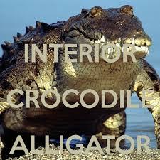 Interior Crocodile Alligator Interior Crocodile Alligator Poster Shromp Keep Calm O Matic