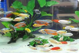 programme on ornamental fish and farming