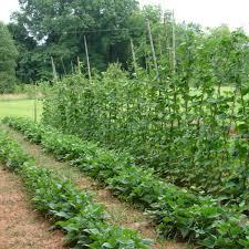 Fall Vegetable Garden Ideas advice for planting fall vegetable gardens u2013 peach living