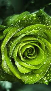 248 best all things green images on pinterest shades of green