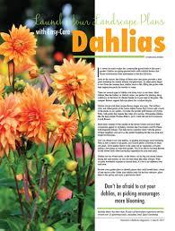launch your landscape plans with easy care dahlias women u0027s