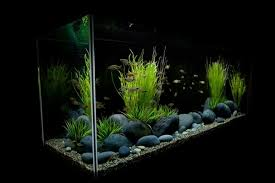Aquascaping Guide How To Choose Plants For Aquascapes U2013 Beginners U0027 Guide