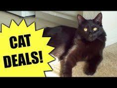 black friday pet adoption melrose fl blackfriday 2013 adoption cat pet animal
