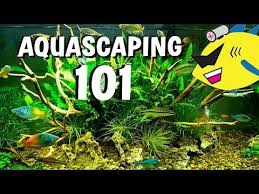 Aquascaping With Driftwood 8 Best Aquascaping Images On Pinterest Aquascaping Step By Step