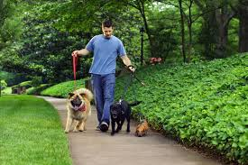 dog trainer career profile and salary information