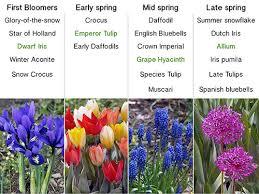planning your spring bulb garden u2014 the lazy gardener