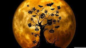 halloween colors wallpaper halloween owls and bats orange hd desktop wallpaper widescreen
