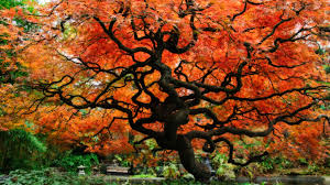 the tree of life widescreen wallpaper wide wallpapers net
