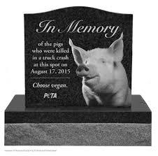 peta wants roadside memorial for pigs killed in truck crash