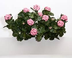 Fake Bushes Window Box Flowers The Perfect Recipe Hooks U0026 Lattice Blog