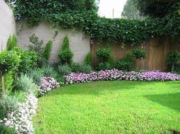 garden and patio purple flower plants for backyard landscaping