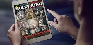 american pitbull terrier heat cycle canine ovulation and progesterone testing bully king magazine
