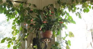 indoor plants lots of our customers been asking for