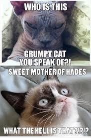 Funny Grumpy Cat Meme - grumpy cat funny meme dump a day