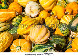 decorative gourds and mini pumpkins stock photo royalty free