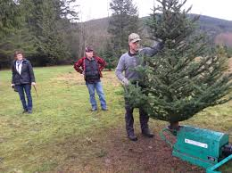 diy u2013 a christmas tradition at willow hollow christmas tree farm