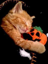 Halloween Cat Meme - halloween animals cute animal pictures and videos blog part 2