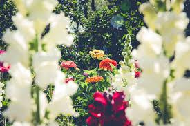 white flower close up shot free stock photo