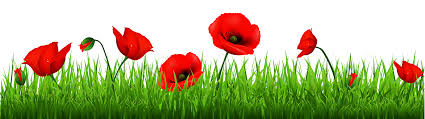red poppy cliparts free download clip art free clip art on