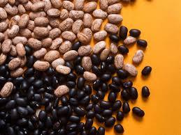 100 pdf mole bean lab answers key biology archive may 25