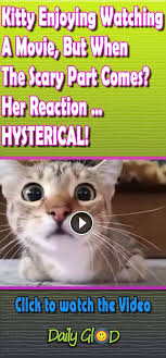 Anxiety Cat Memes - this kitten is quite a movie buff but she hates scary scenes this