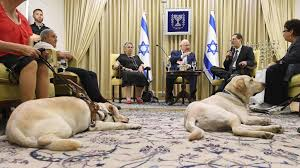 Blind Dog And His Guide Dog For Blind Israelis Every Guide Dog Has Its Day The Times Of Israel