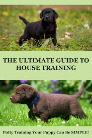 how to potty train a puppy a complete guide from the labrador site
