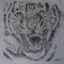 tiger life of bonnie