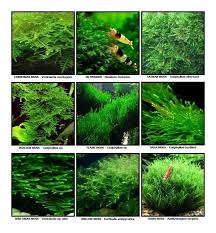 pin by k on fishes pinterest aquariums fish tanks and