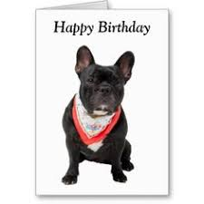 happy birthday to you greeting cards bulldog birthday