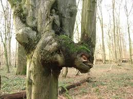 free photo tree spirit tree forest free image on pixabay 84989
