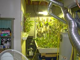 orchid collection under t5 high output fluorescent grow lights