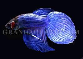 aquarium fish wholesale tropical fish wholesale freshwater fish