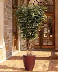 handcrafted 6 u0027 deluxe silk ficus tree at petals