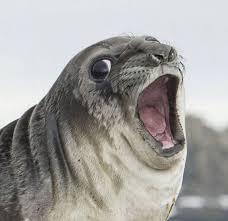 Gay Seal Meme Generator - meme template search imgflip