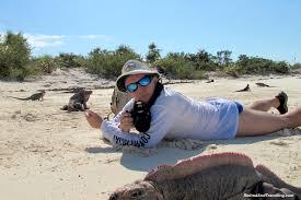 iguana island exuma swim with pigs retired and travelling