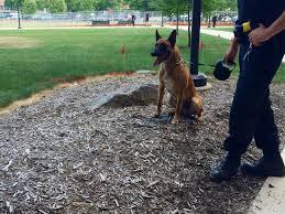 belgian sheepdog georgia meet the penn state police k 9 units onward state