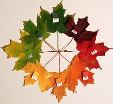 why do leaves change colour in autumn science made simple