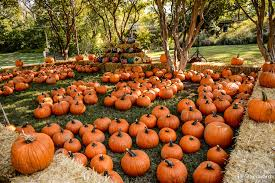 hi res halloween images fall scene wallpaper with pumpkins wallpapersafari