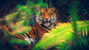 halloween nature background fantasy tag wallpapers page 8 cats oriental predator nature tiger