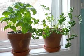 7 foods you can easily grow indoors this winter